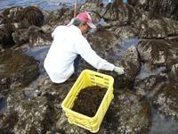 海草液肥づくり